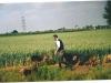 Mellard '03 11