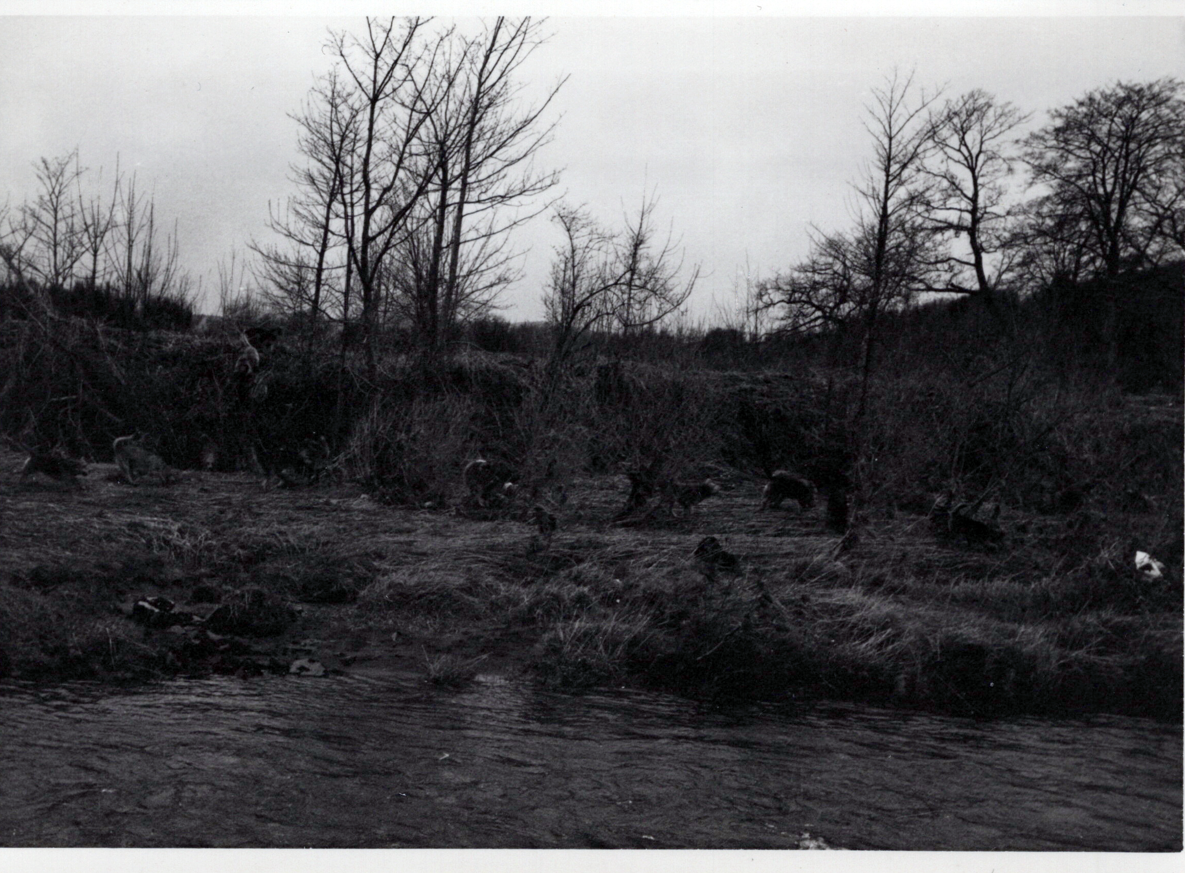 1970_Mei_Otterhound-Schotland_0002_a