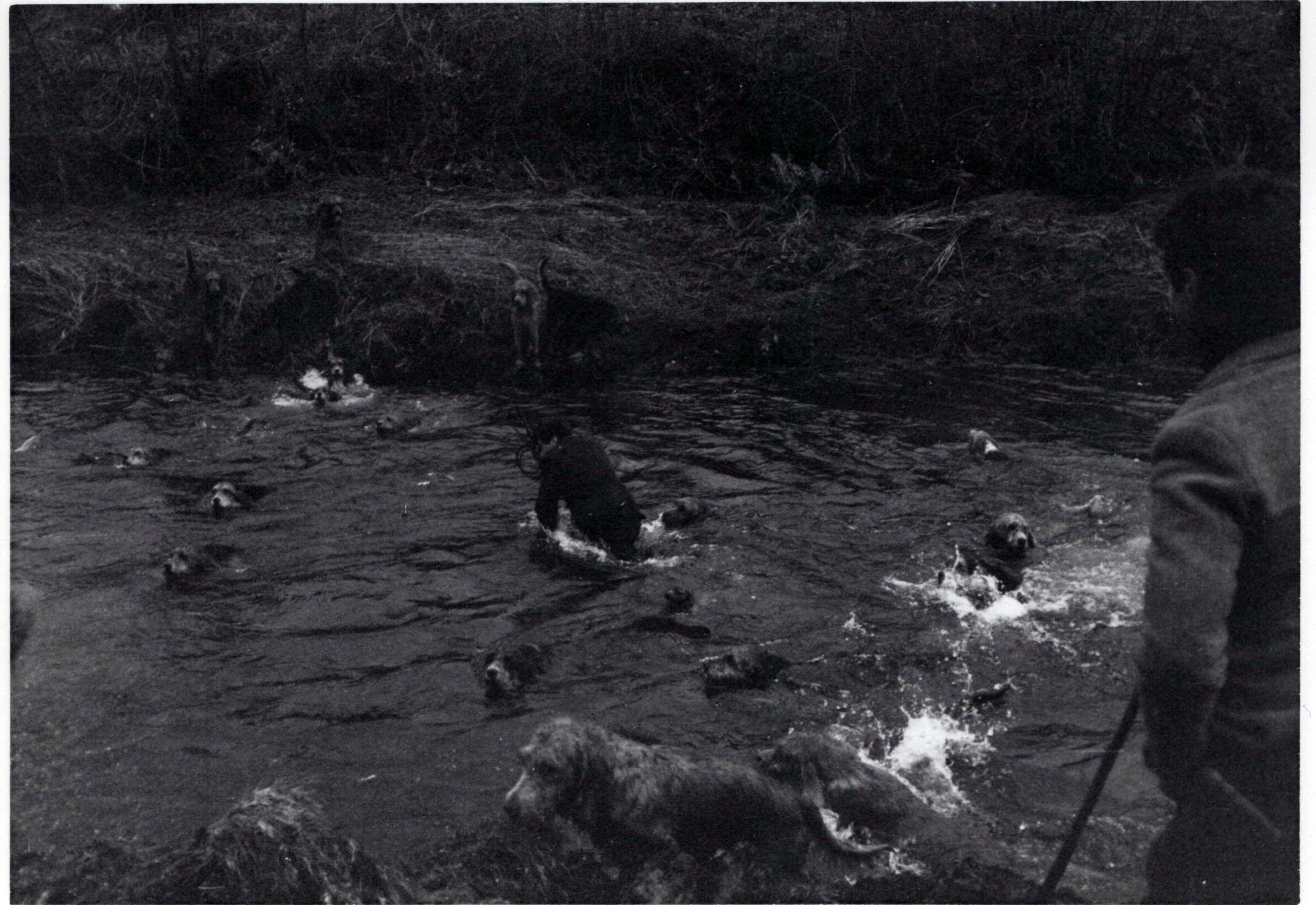 1970_Mei_Otterhound-Schotland_0011_a