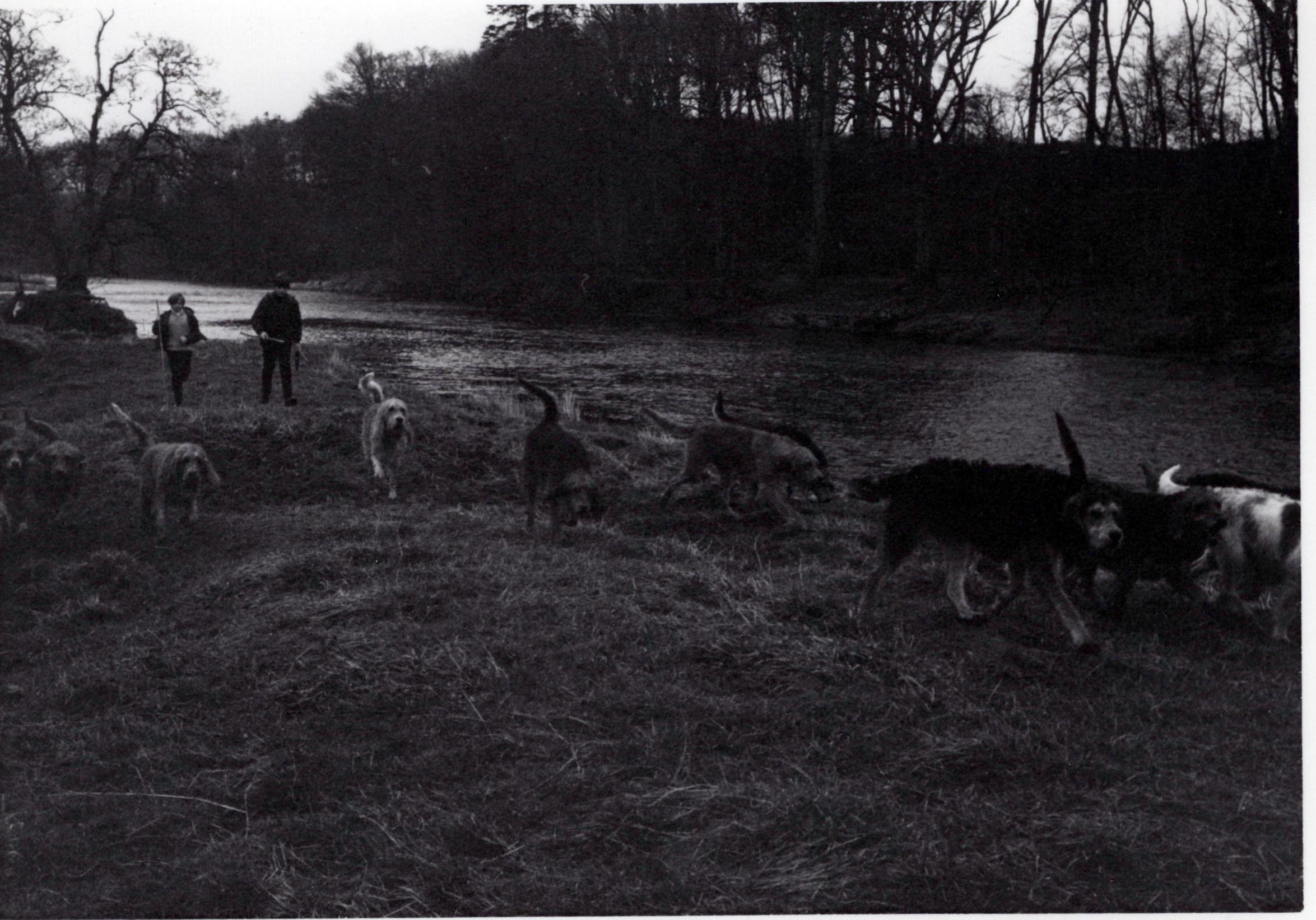 1970_Mei_Otterhound-Schotland_0018_a