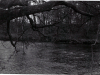 1970_Mei_Otterhound-Schotland_0025_a